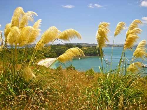 Overlooking Calypso Bay on Motuihe Island, nr Waiheke Island, NZ
