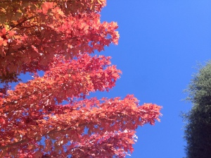 Autumn leaves in Bright - living up to its name!